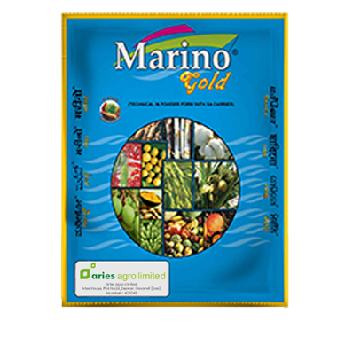 marino-gold-2-new
